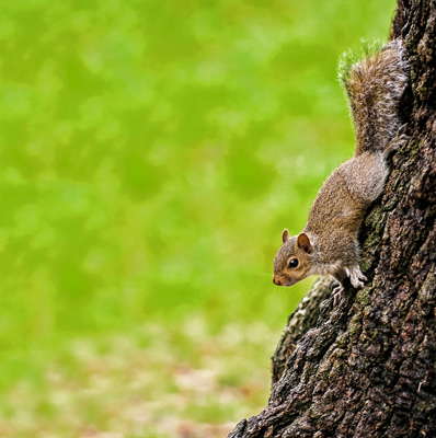 squirrel on the side of a tree trunk